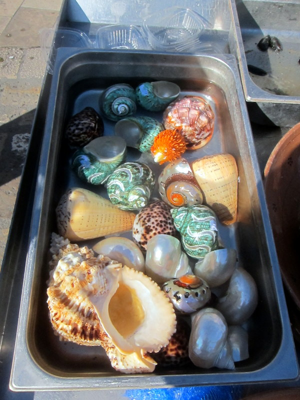 Random shells - what beauties.